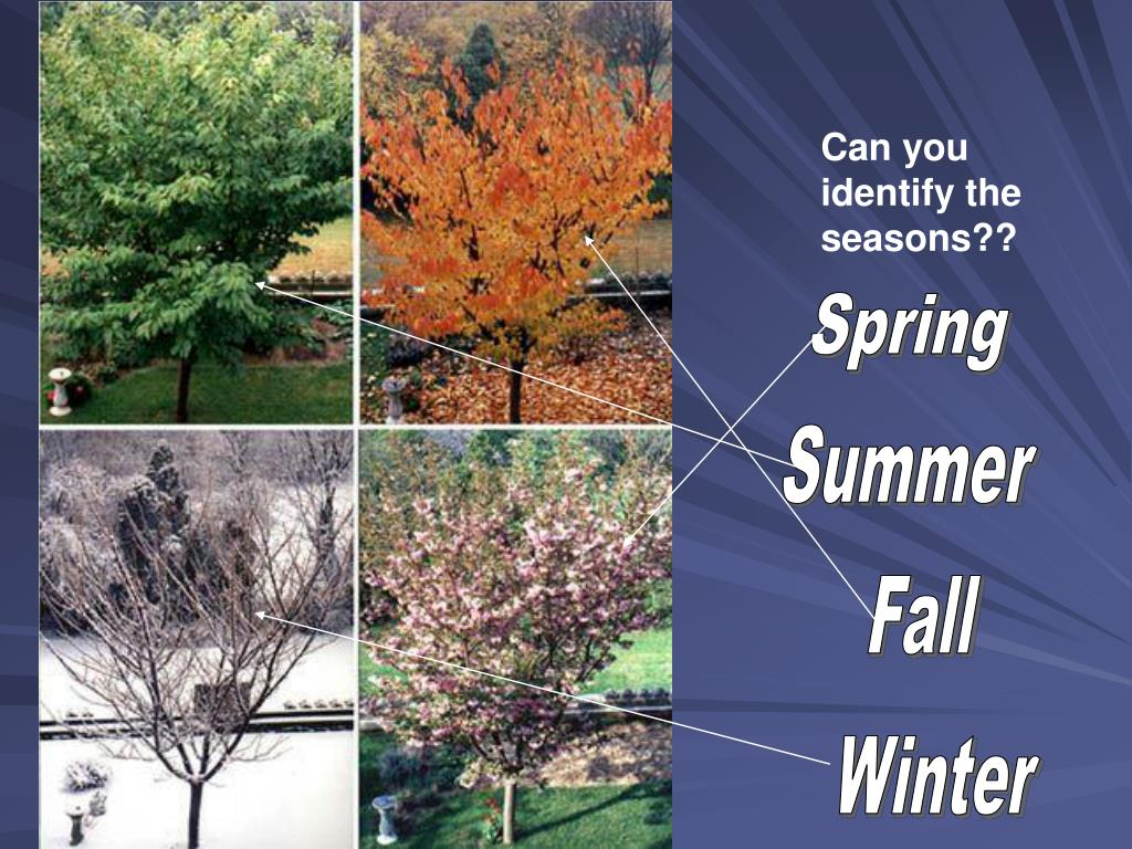 Can you identify the seasons??