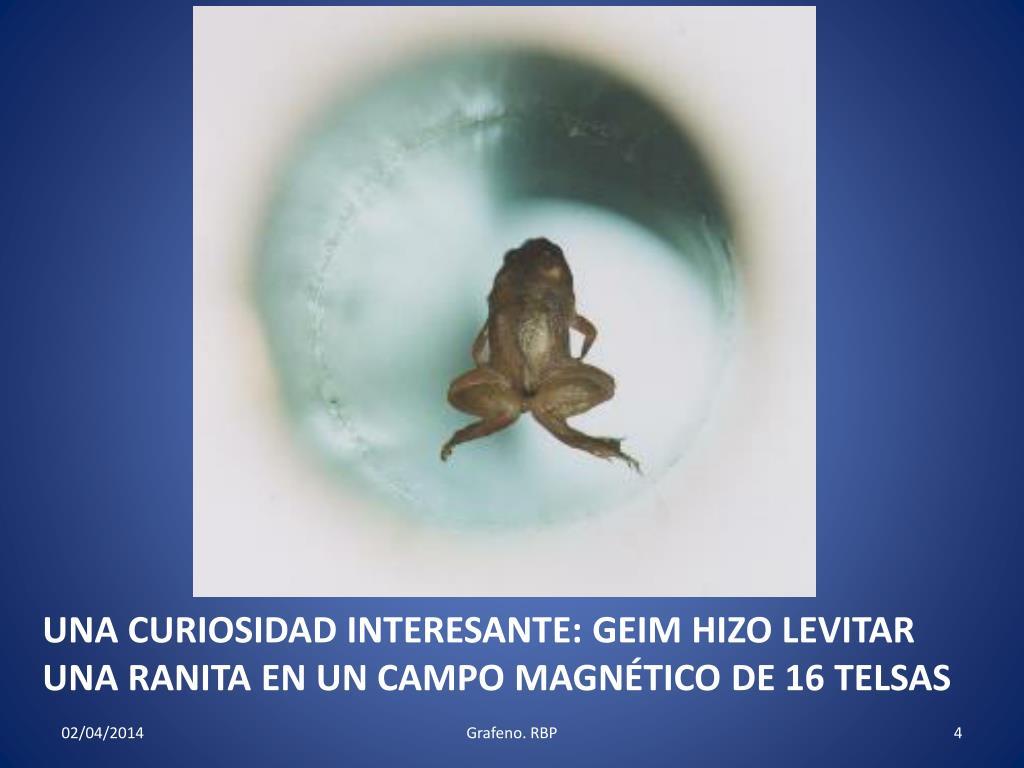 UNA CURIOSIDAD INTERESANTE: GEIM HIZO LEVITAR UNA RANITA EN UN CAMPO MAGNÉTICO DE 16 TELSAS