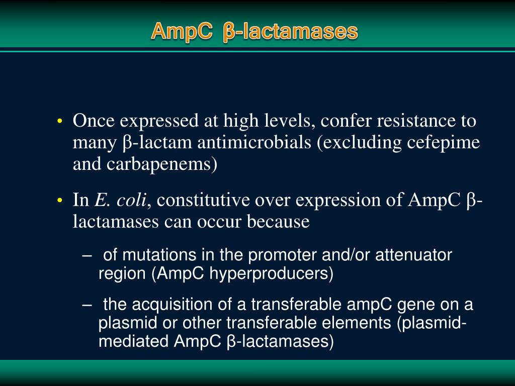 Once expressed at high levels, confer resistance to many β-lactam antimicrobials (excluding cefepime and carbapenems)