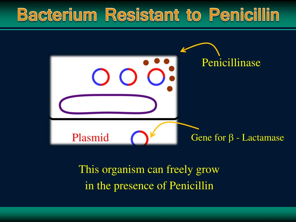 Bacterium Resistant to Penicillin