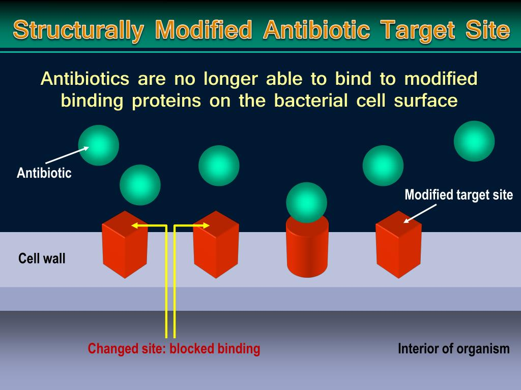 Structurally Modified Antibiotic Target Site