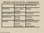 muscles and nerves by compartment