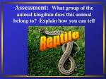 assessment what group of the animal kingdom does this animal belong to explain how you can tell33