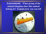 assessment what group of the animal kingdom does this animal belong to explain how you can tell39