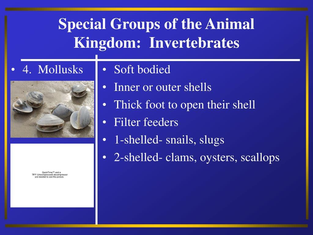 4.  Mollusks