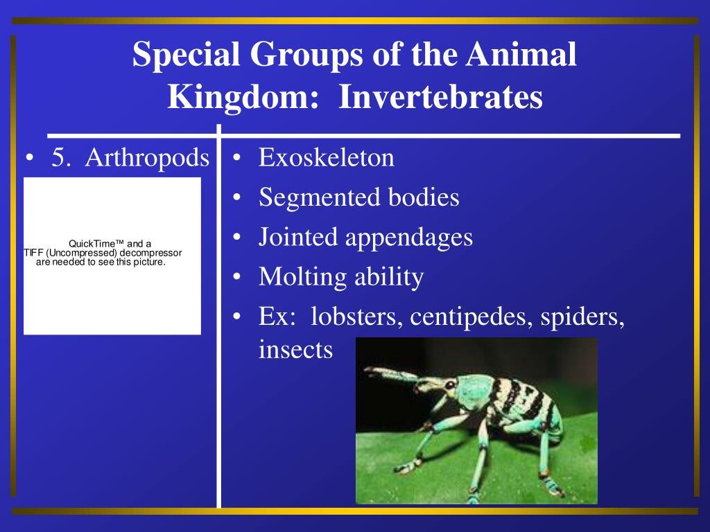 5.  Arthropods