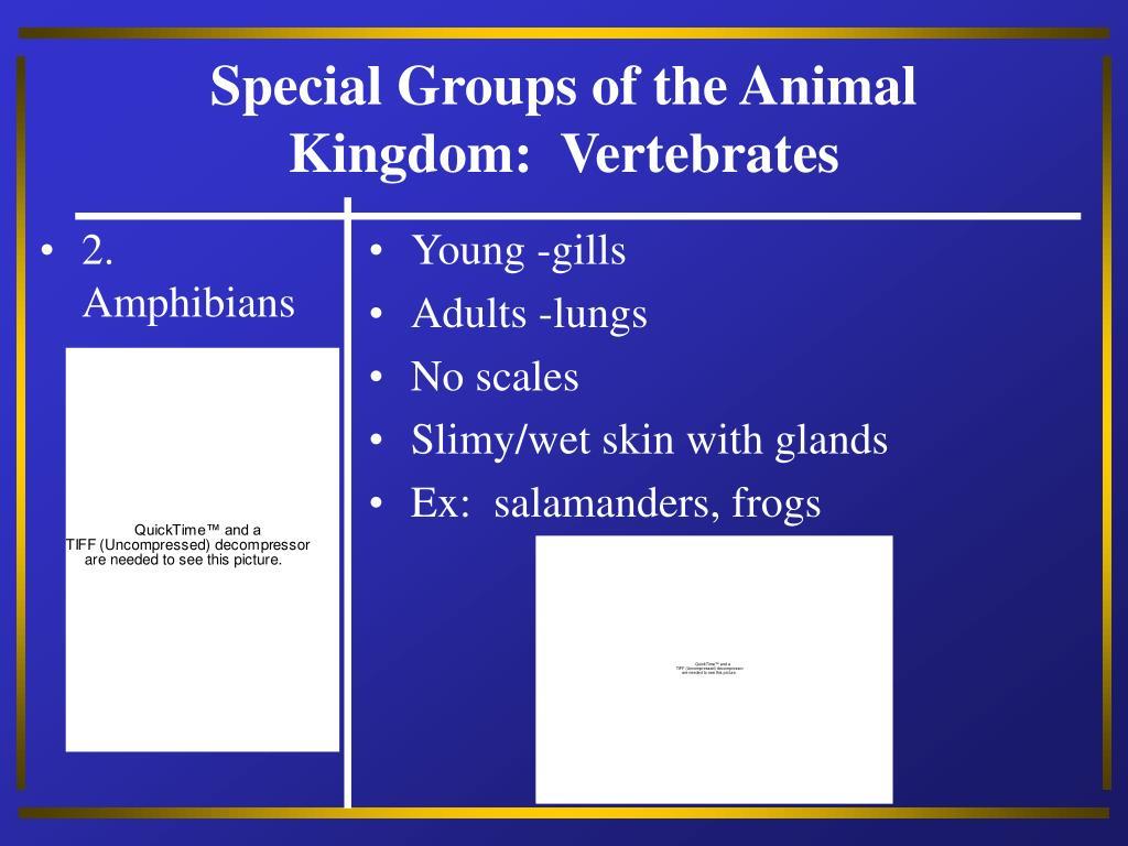 2.  Amphibians
