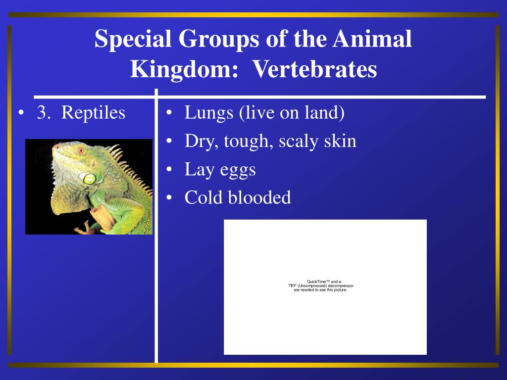 3.  Reptiles