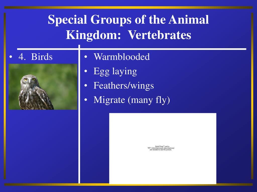 4.  Birds