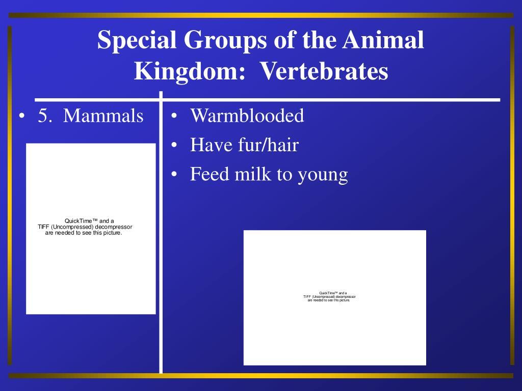 5.  Mammals