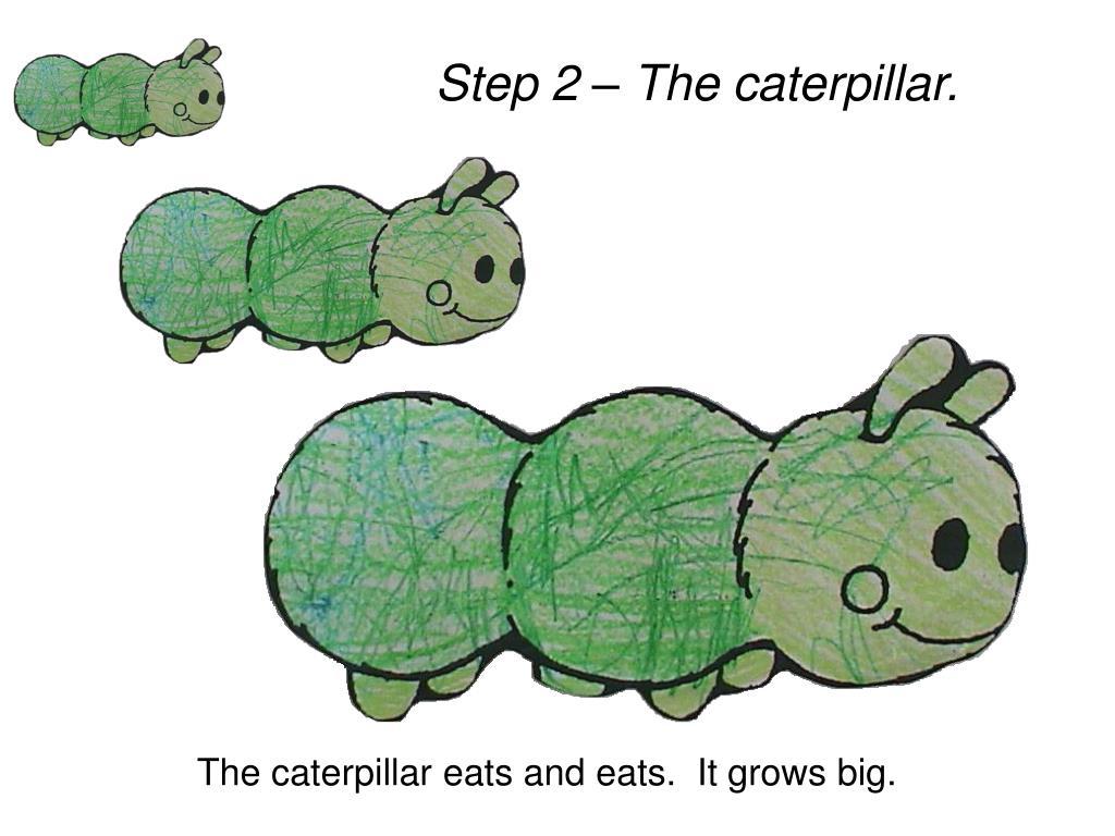 Step 2 – The caterpillar.