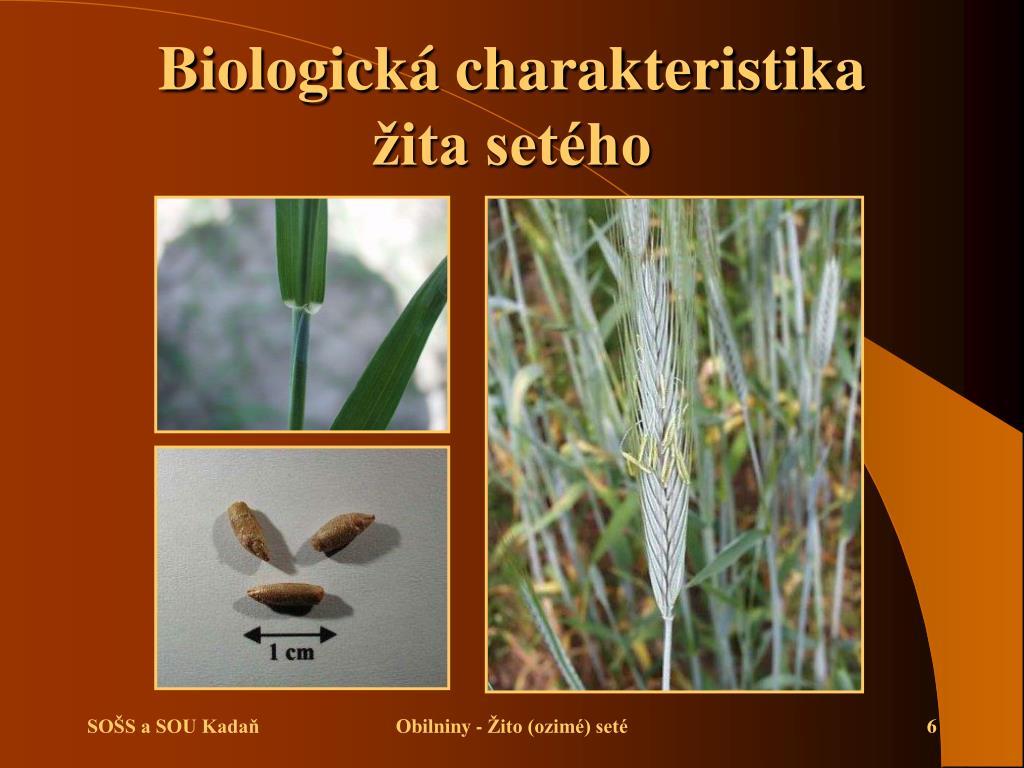 Biologická charakteristika