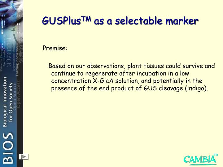 Gusplus tm as a selectable marker