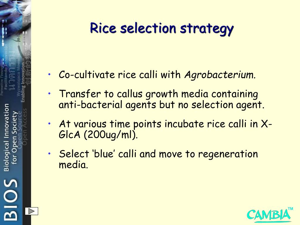 Rice selection strategy