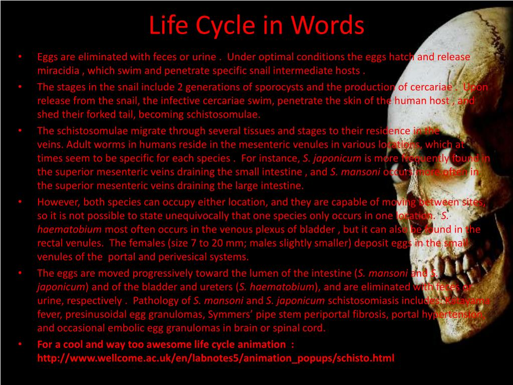 Life Cycle in Words