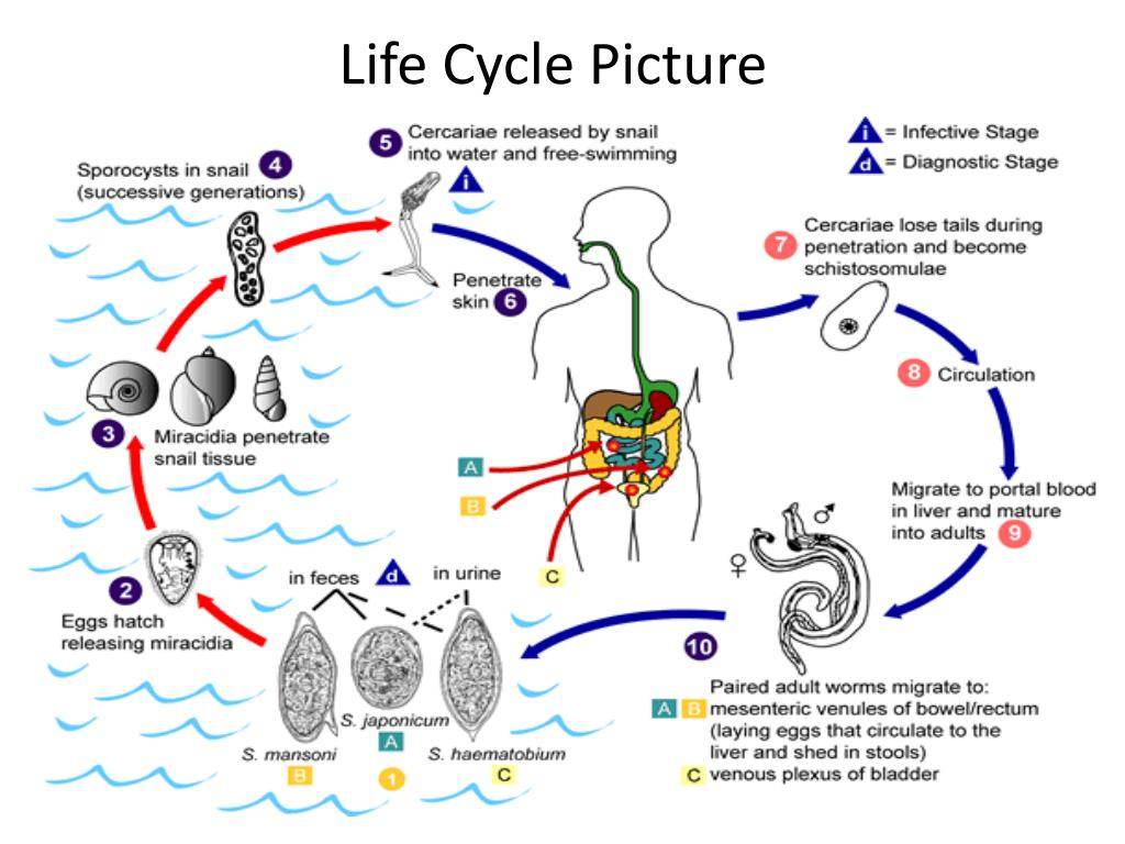 Life Cycle Picture