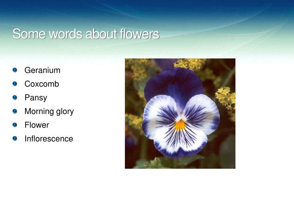 Some words about flowers