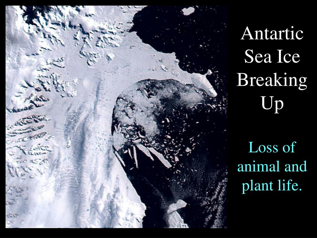 Antartic Sea Ice Breaking Up