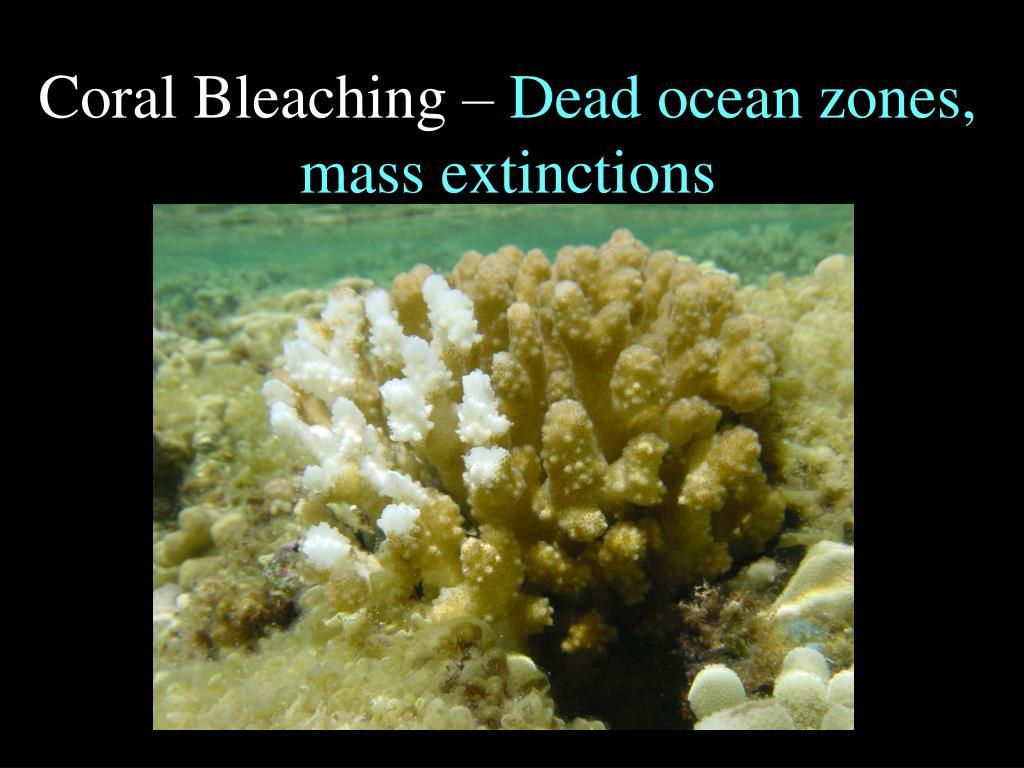 Coral Bleaching –
