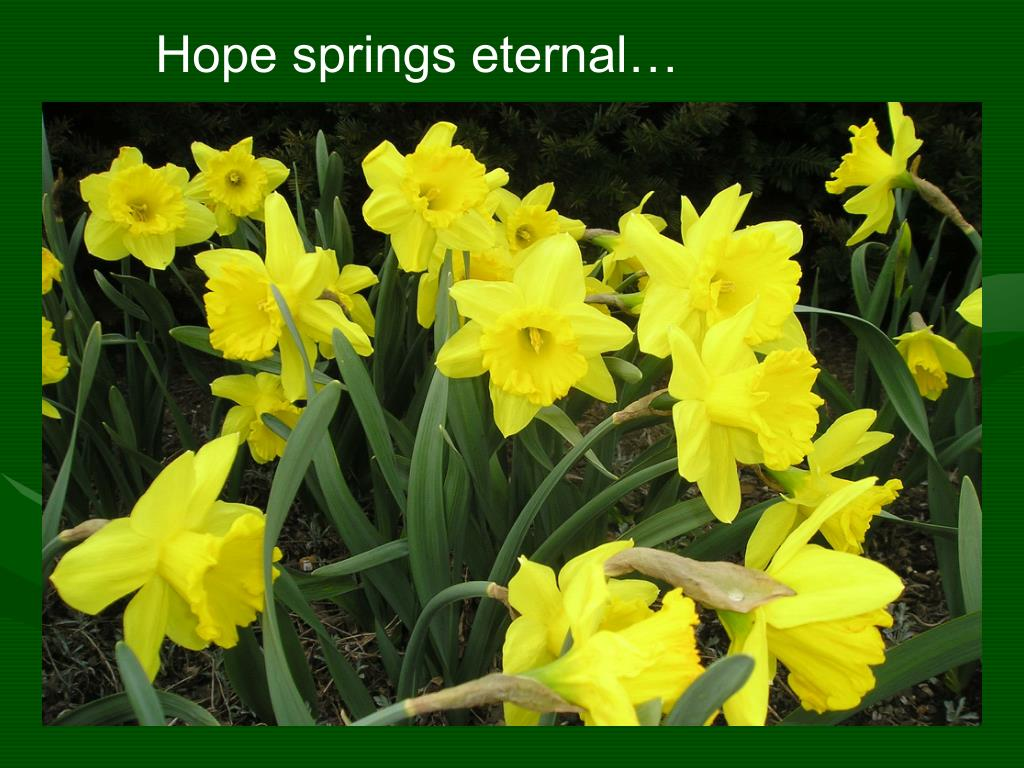 Hope springs eternal…