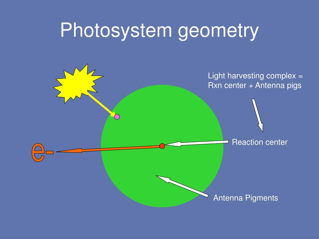 Photosystem geometry