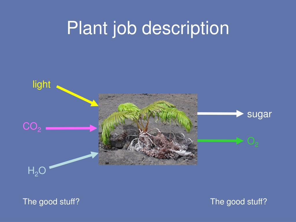 Plant job description