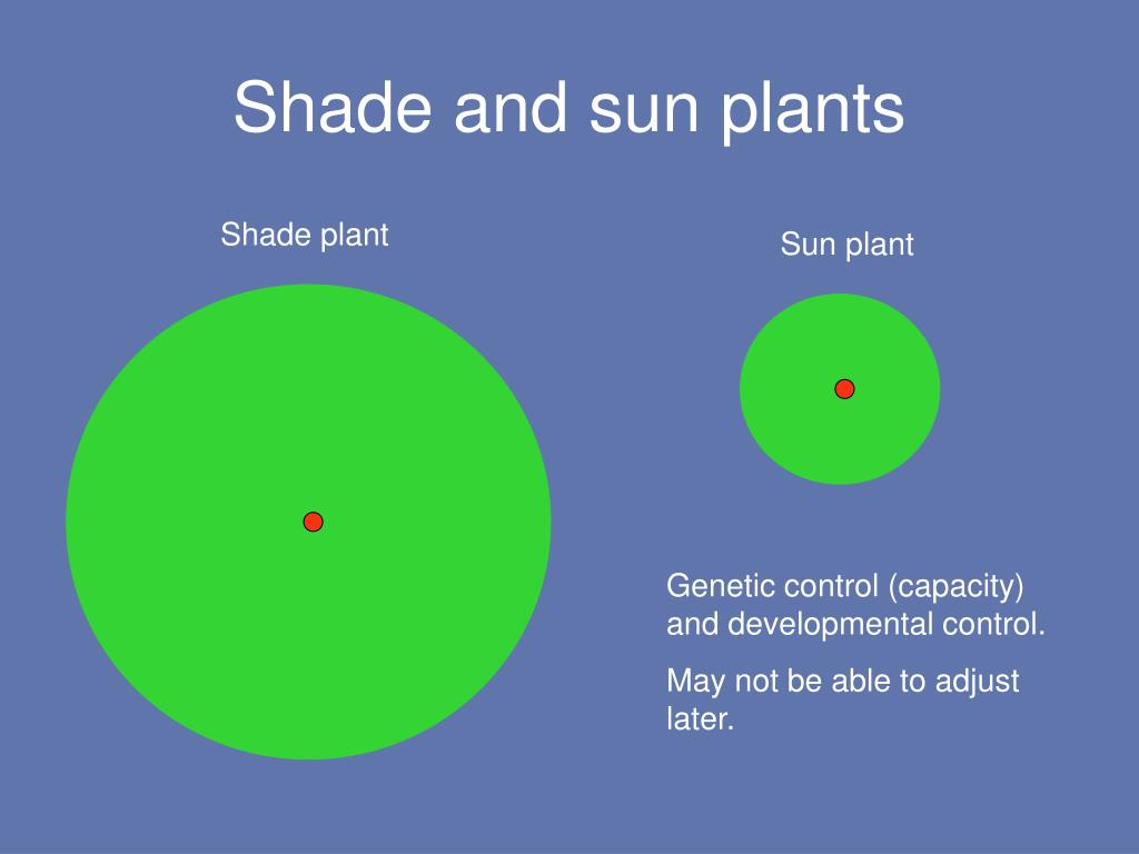 Shade and sun plants