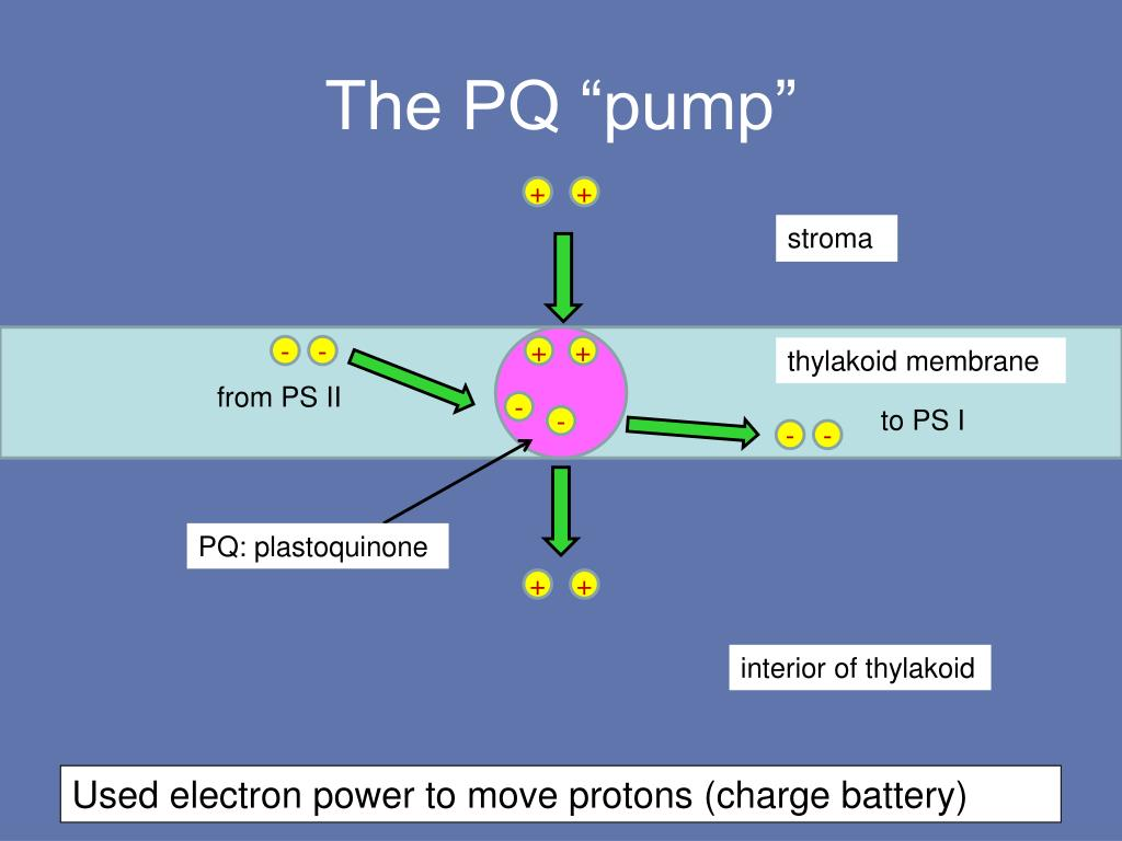 "The PQ ""pump"""