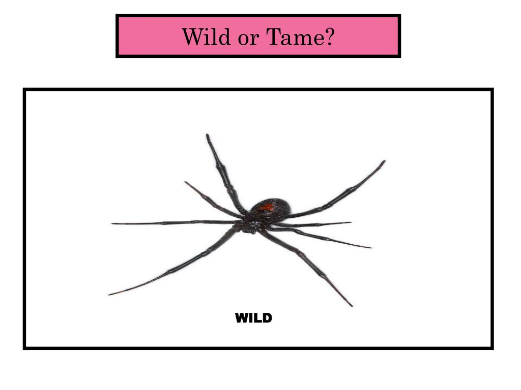 Wild or Tame?