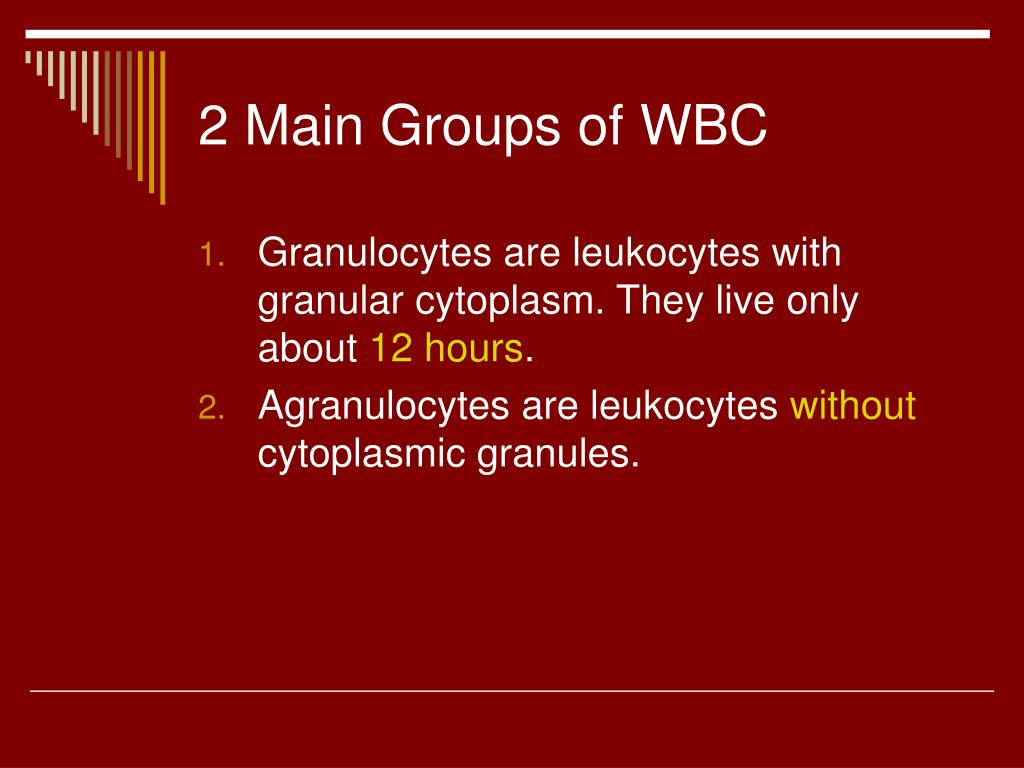 2 Main Groups of WBC