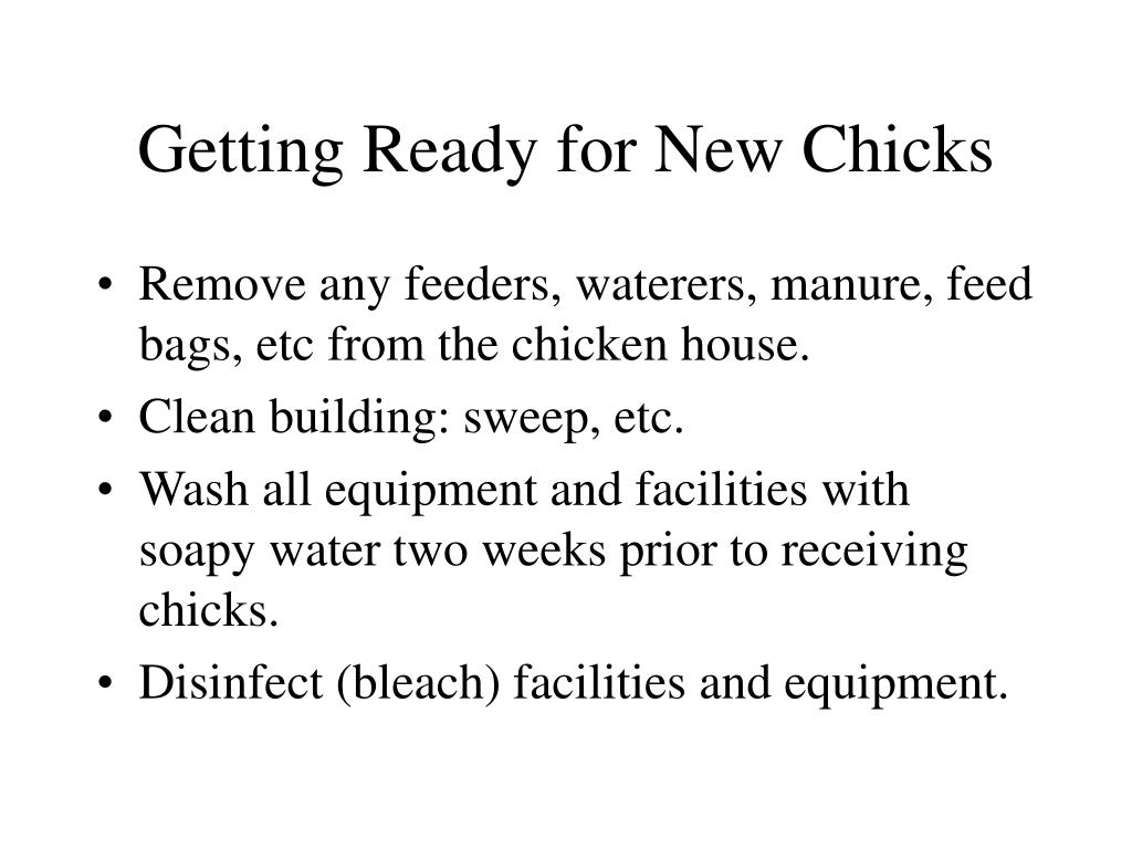 Getting Ready for New Chicks