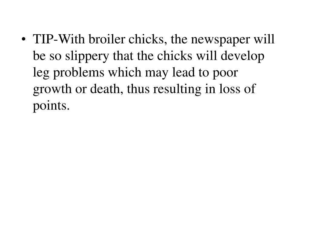 TIP-With broiler chicks, the newspaper will be so slippery that the chicks will develop leg problems which may lead to poor growth or death, thus resulting in loss of points.