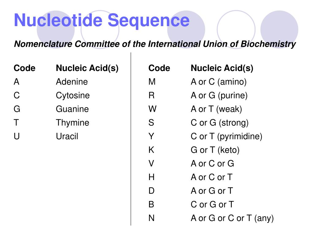 Nucleotide Sequence