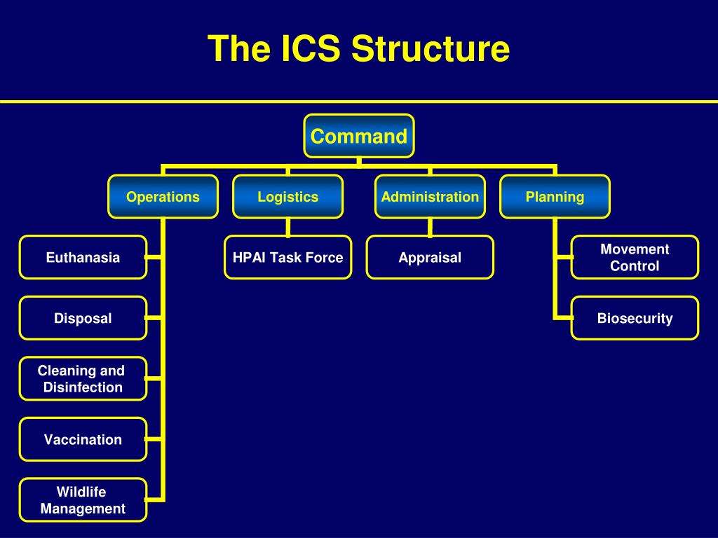 The ICS Structure