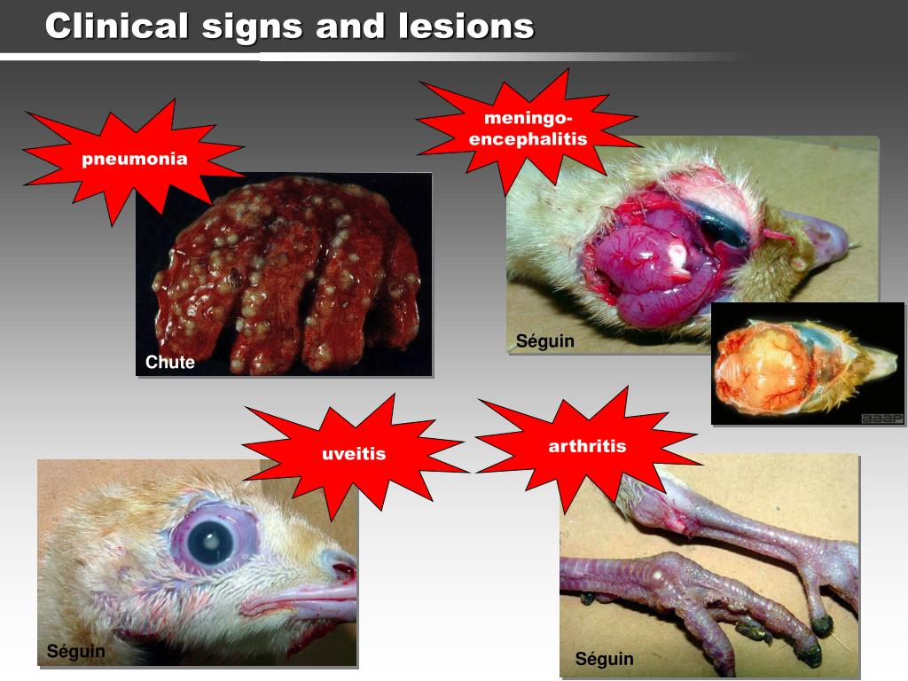 Clinical signs and lesions