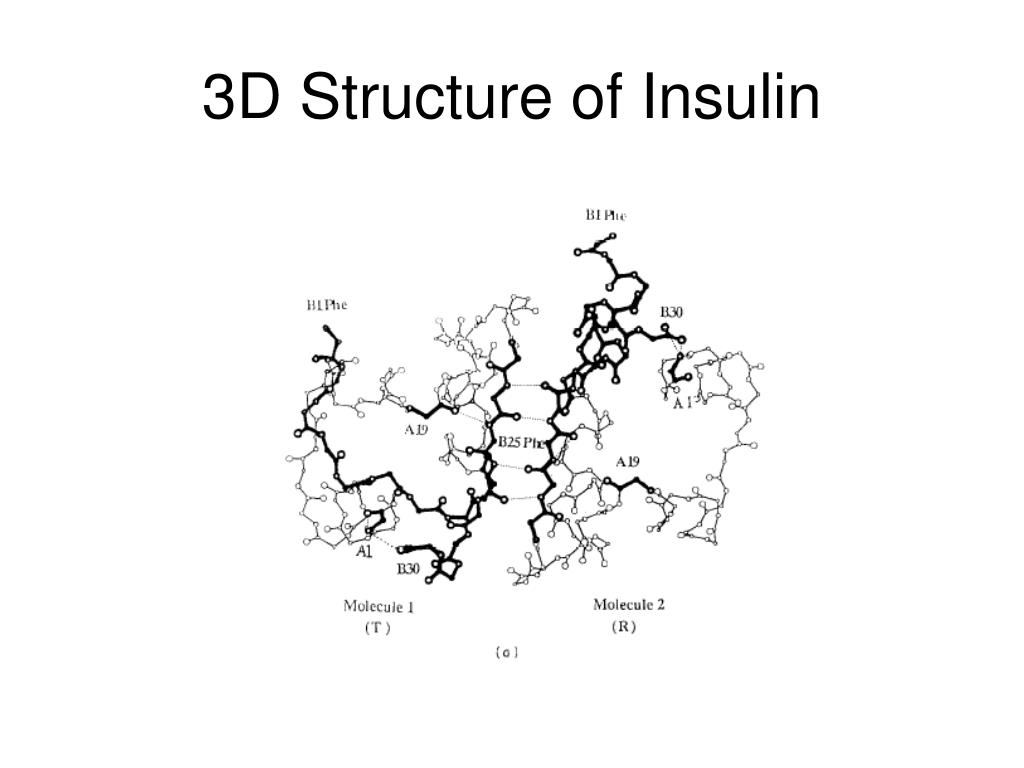 3D Structure of Insulin