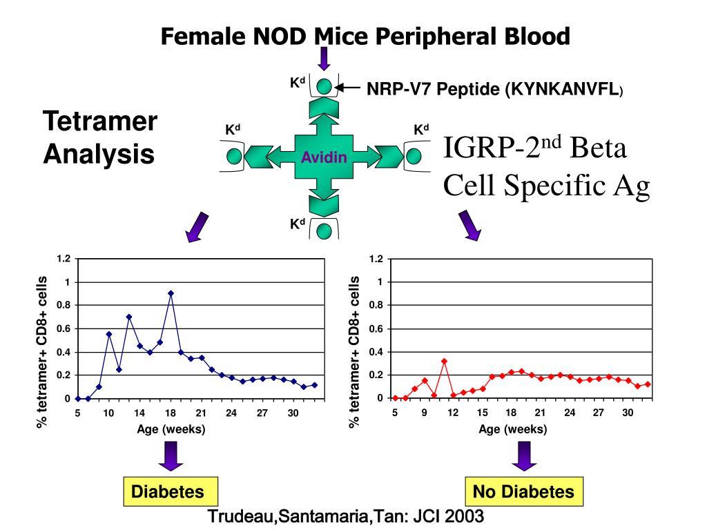 % tetramer+ CD8+ cells