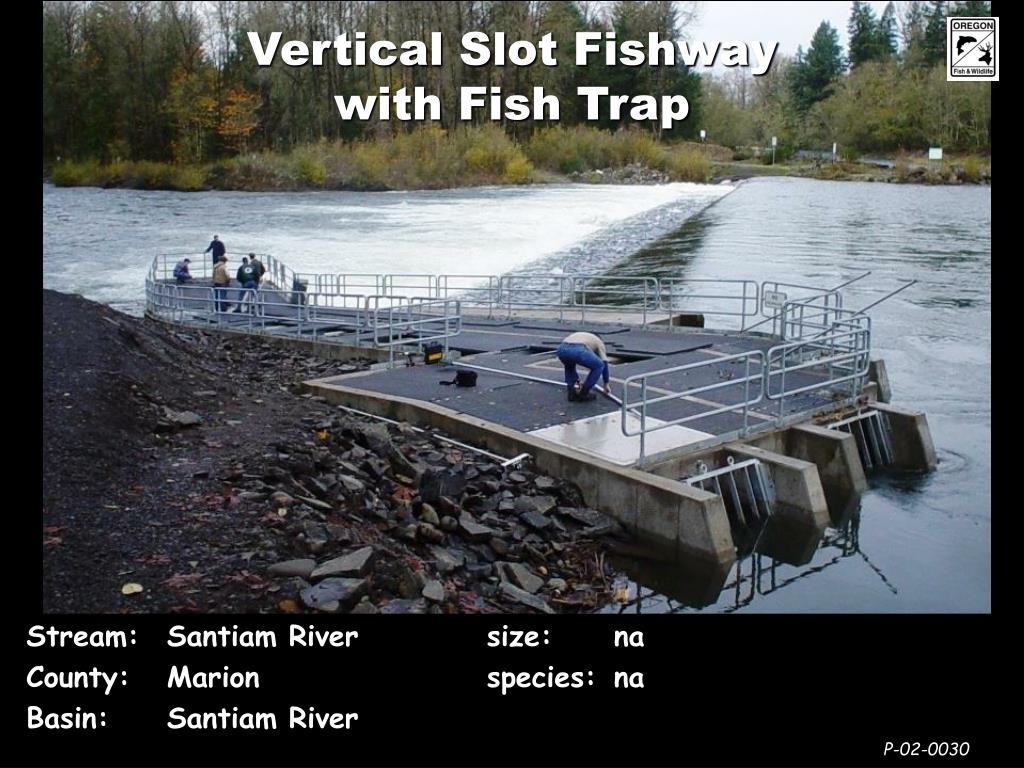 Vertical Slot Fishway