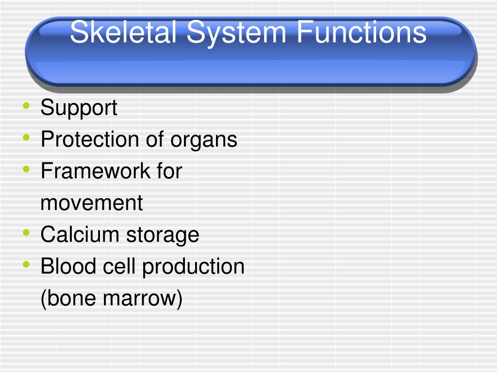 Skeletal System Functions
