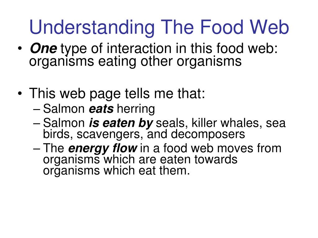 Understanding The Food Web