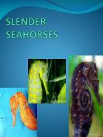 slender seahorses