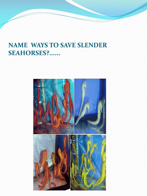 NAME  WAYS TO SAVE SLENDER SEAHORSES?......