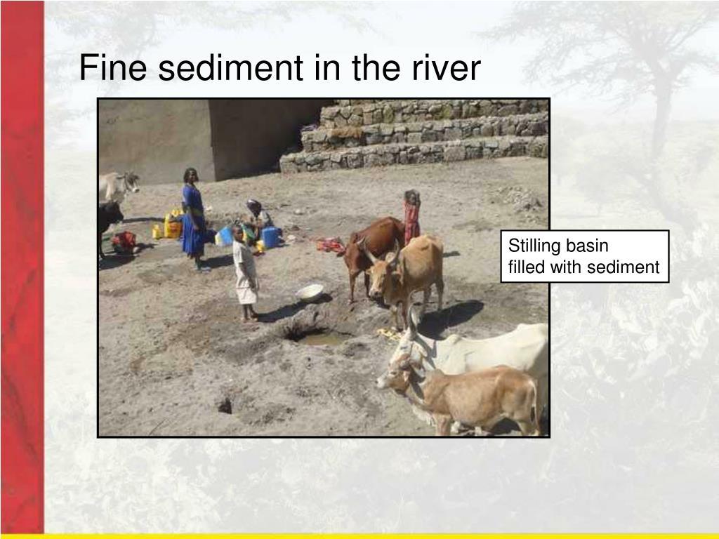 Fine sediment in the river