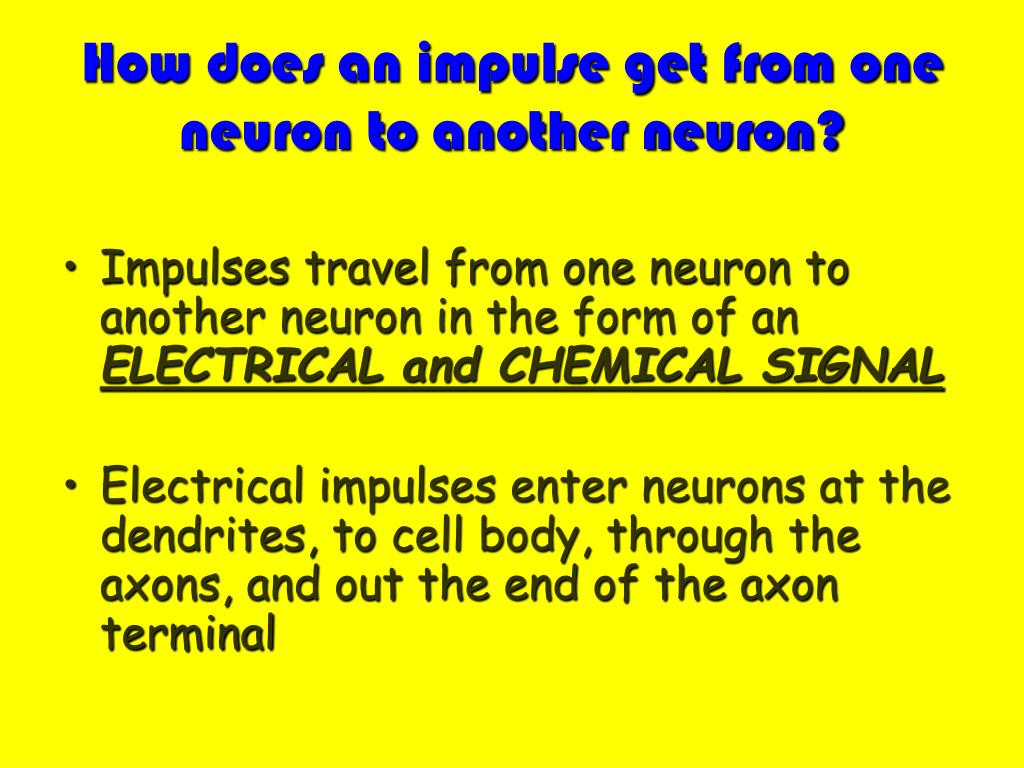 How does an impulse get from one neuron to another neuron?