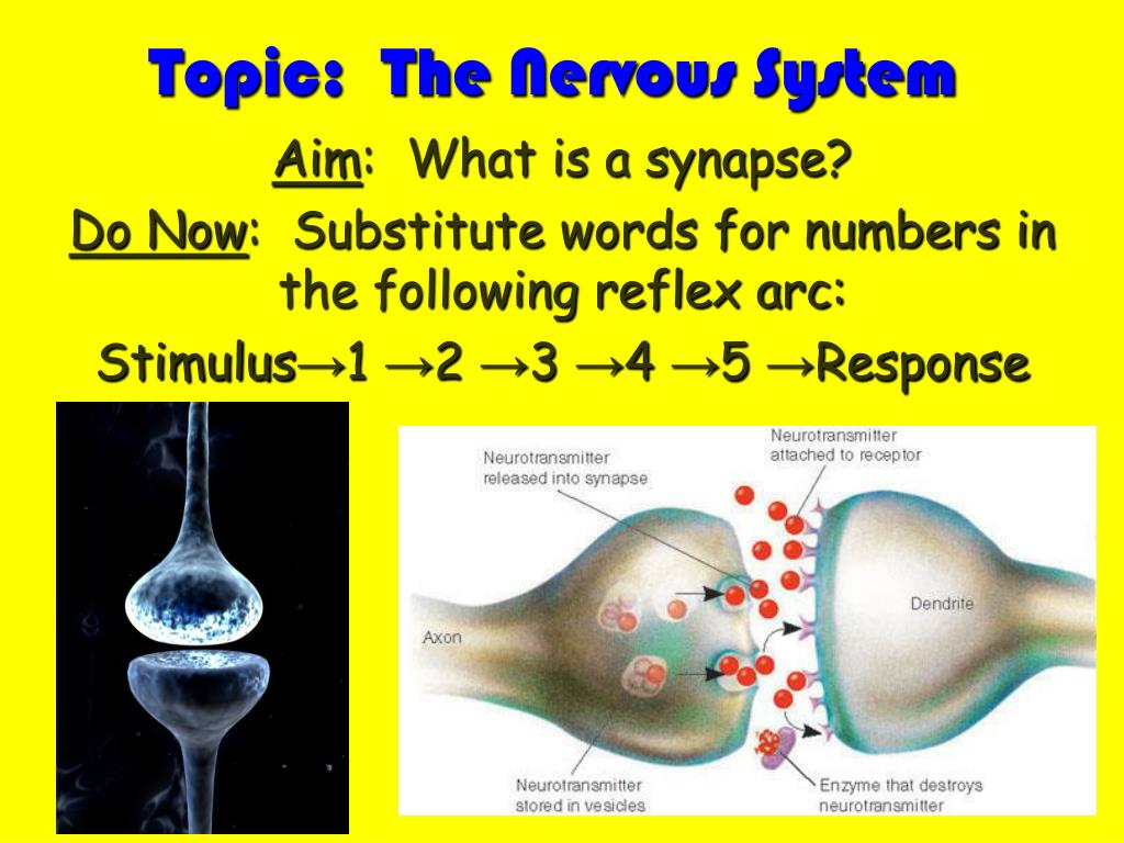 Topic:  The Nervous System