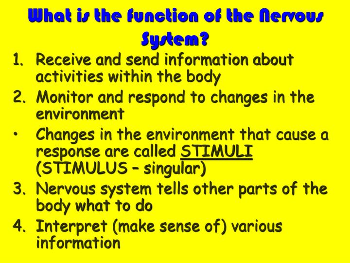 What is the function of the nervous system