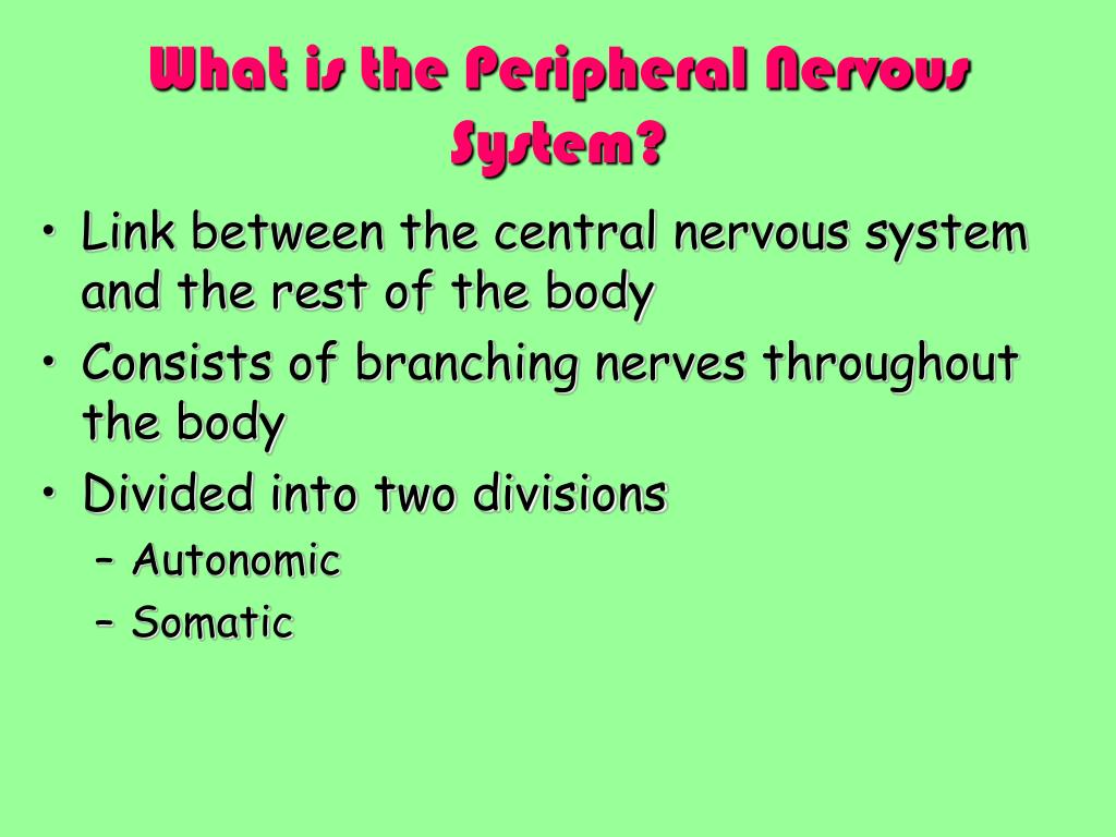 What is the Peripheral Nervous System?