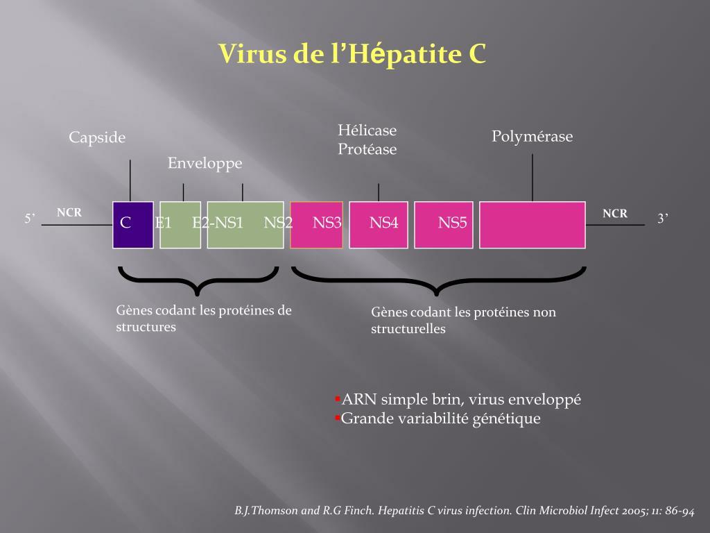 Virus de l