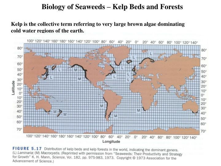 Biology of seaweeds kelp beds and forests