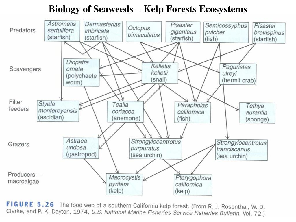 Biology of Seaweeds – Kelp Forests Ecosystems